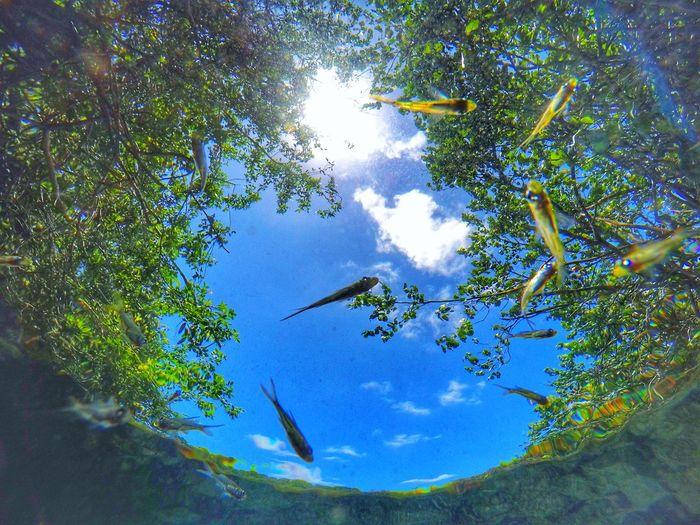 Tree Blue Water Estuary