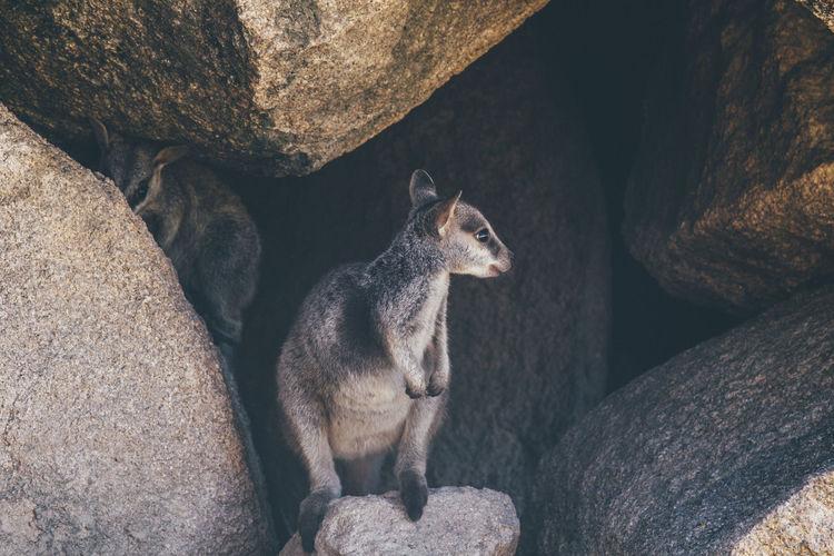 Cat on rock