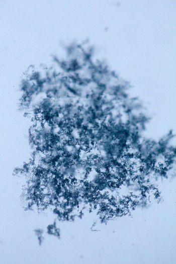 enjoy the simple things in life Macro Photography Beauty In Nature Close-up Cold Temperature Day Fragility Freshness Frost Frozen High Angle View Ice Ice Crystal Macro_collection Nature No People Outdoors Scenics Sky Snow Snowflake Tranquility Tree Weather White Background Winter