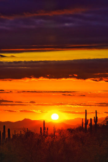 Silhouette saguaro cactus on field against sky during sunset