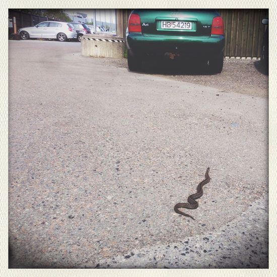 Smooth little thing. Snake Pavement Parking Lot