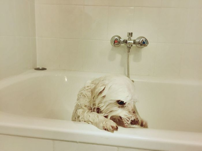 Close-Up Of Dog Relaxing In Bathtub