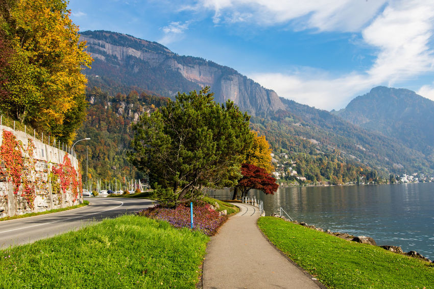 Lakeside view. Beauty In Nature La Landscape Mountain Nature Outdoors Pinaceae Road Scenics Travel Destinations Tree