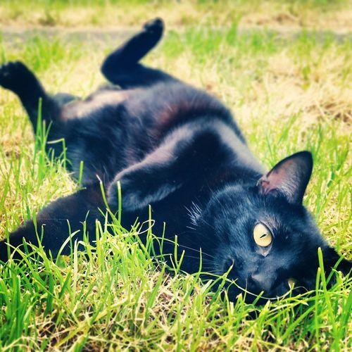 Garden Cats Silly Rollingaround