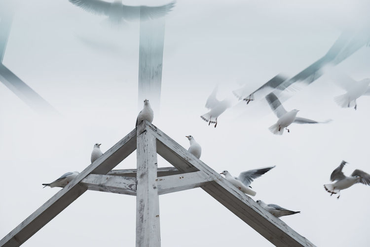 Flock of sea gulls disappearing in the air Bird Flying Low Angle View No People Nature Flock Of Birds Seagull Outdoors Abstract Photography Reflection Flying High Disappear Foggy Day Foggy Weather