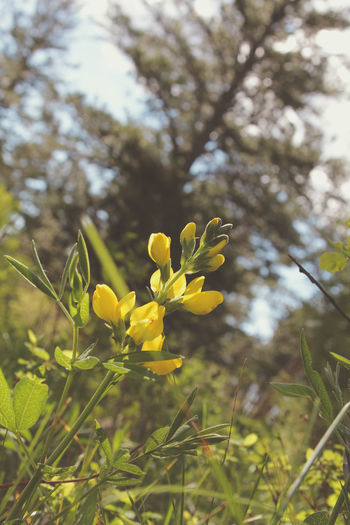 In the light. Beauty In Nature Close-up Day Flower Forest Flora Fragility Freshness Growth In The Light Low Angle View Nature No People Outdoors Plant Springtime Tree Yellow Yellow Color Yellow Flower Yellow Flowers