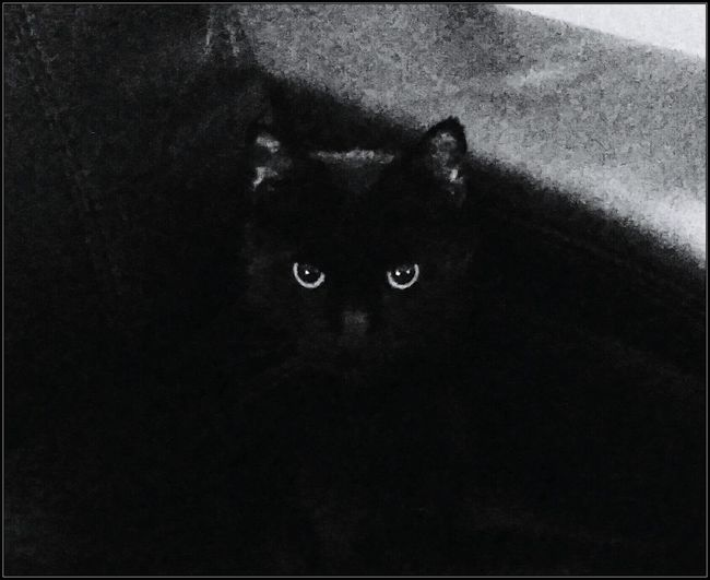 If looks could kill... LOL! My cat Boo is in my chair and is giving me the look that he 'is NOT moving'! I let him stay, he had me laughing so hard! I love my boy! Black Cat Black And White Cat Eyes Staringcontest Fresh EyeEm Animals Cell Phone Photography
