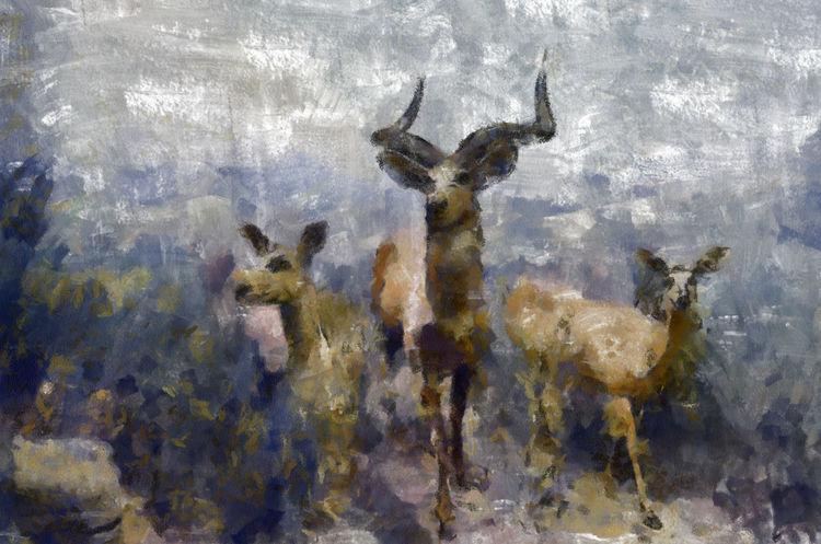 out of the MIST DbJR Animal Themes Animal Wildlife Deer Doe Elk Hunting Nature Outdoors Stag Wildlife Wildlife & Nature EyeEmNewHere EyeEm Nature Lover EyeEmBestPics
