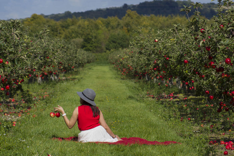 Apple Apple Orchard Appletree Apple - Fruit Apple Tree Apples Beauty In Nature Day Freshness Grass Growth Nature One Person One Woman Only Only Women Outdoors Plant Real People Rear View Red Tree Women #FREIHEITBERLIN