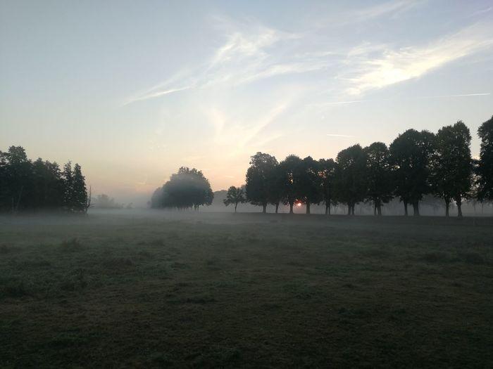 Morgens in der Lausitz Elsterwerda