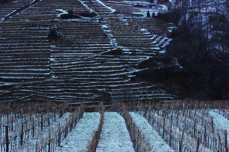 Architecture Austria Austrianphotographers Landscape Landscape_photography Wachau Wineyard Winter Österreich Showcase: November The Great Outdoors - 2016 EyeEm Awards