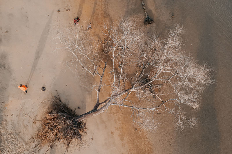 the death of tree aerial view No People Land High Angle View Nature Plant Tree Day Cold Temperature Beauty In Nature Outdoors Scenics - Nature Tranquility Winter Sand Close-up Snow Dry Non-urban Scene Bare Tree Arid Climate Climate