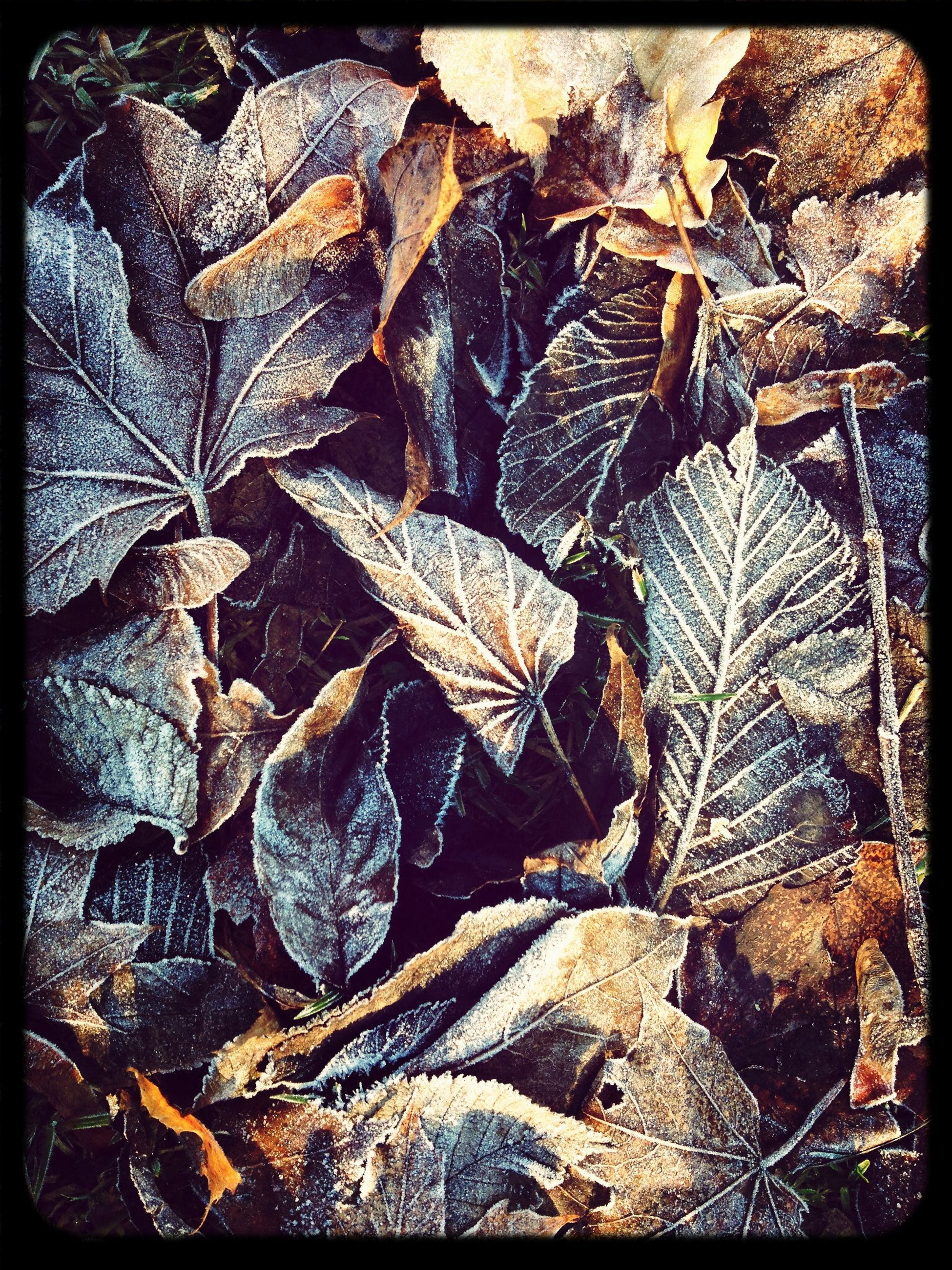 transfer print, auto post production filter, leaf, full frame, backgrounds, dry, natural pattern, nature, high angle view, close-up, textured, autumn, abundance, leaves, outdoors, no people, day, pattern, leaf vein, fallen