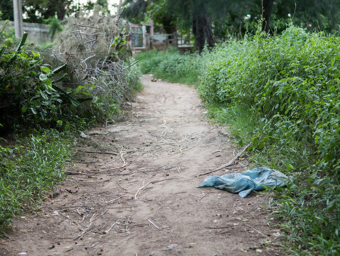 A blue plastic bag sticks out along a dirt path in Las Tunas, Cuba 2017. Animal Animal Themes Day Direction Dirt Dirt Road Footpath Grass Green Color Growth Land Litter Nature No People One Animal Outdoors Plant Plastic Road The Way Forward Tree Vertebrate