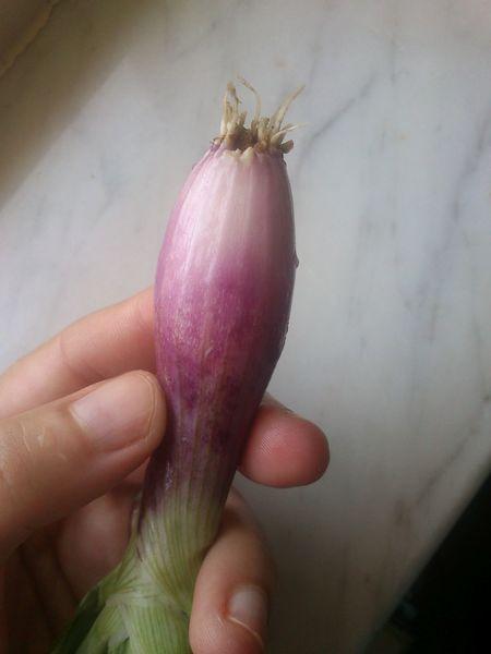 Scalogno Cipolla  Foodphotography Freshvegetables Onion Vegetables