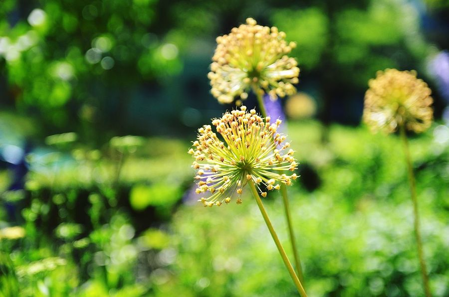 Botanical Gardens Light Beauty In Nature Blooming Botanic Close-up Day Flower Flower Head Flowers Focus On Foreground Forest Forest Photography Fragility Freshness Green Color Growth Meadow Nature No People Outdoors Petal Plant Springtime Summer