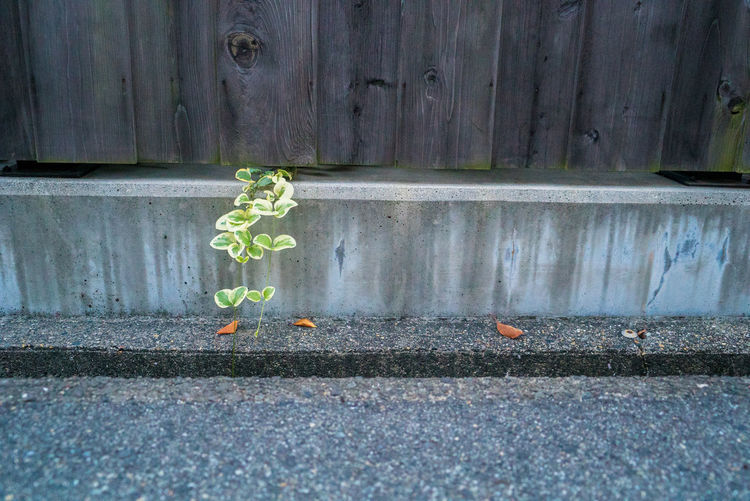 Day Leaf Plant Part Green Color No People Nature Outdoors Wood - Material Plant Built Structure Architecture Wall - Building Feature Footpath Growth Street Close-up City Road Building Exterior Autumn Leaves Streetphotography EyeEmNewHere