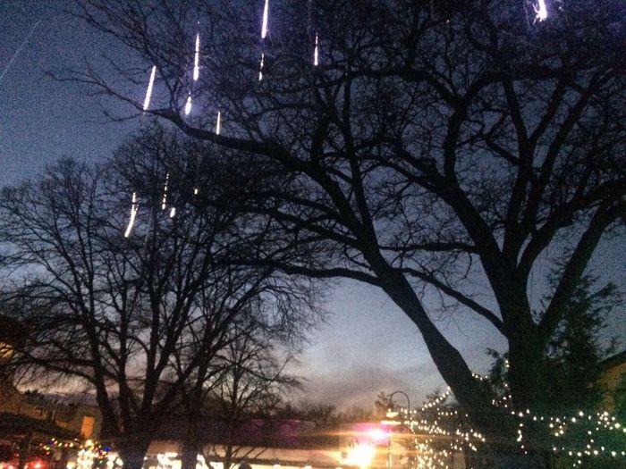 Night Tree Illuminated Sky Outdoors Silhouette No People Star - Space Astronomy