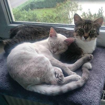 Die Minimänner wurden heute geimpft und mussten sich erstmal von Wassi trösten lassen. Blanco_the_cat Wassilita_the_cat Schlafendetiere_tsez