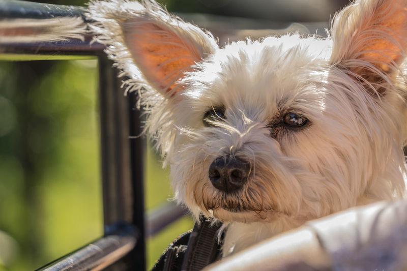 Hund Frühling Hund In Aktion Tier Makro Fell Heikobo Hundegesicht Hundenase Natur Pur Sommer