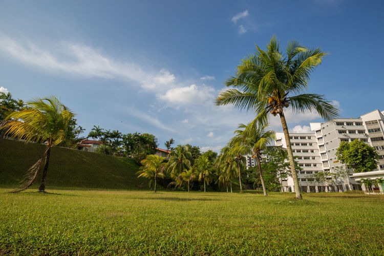 Singapore Landscapes: Open field with Coconut trees 2 Apartment Architecture Beauty In Nature Built Structure Cloud - Sky Coconut Palm Tree Coconut Trees Day Environment Field Grass Green Color Growth Land Landscape Nature No People Outdoors Palm Tree Plant Sky Tree Tropical Climate