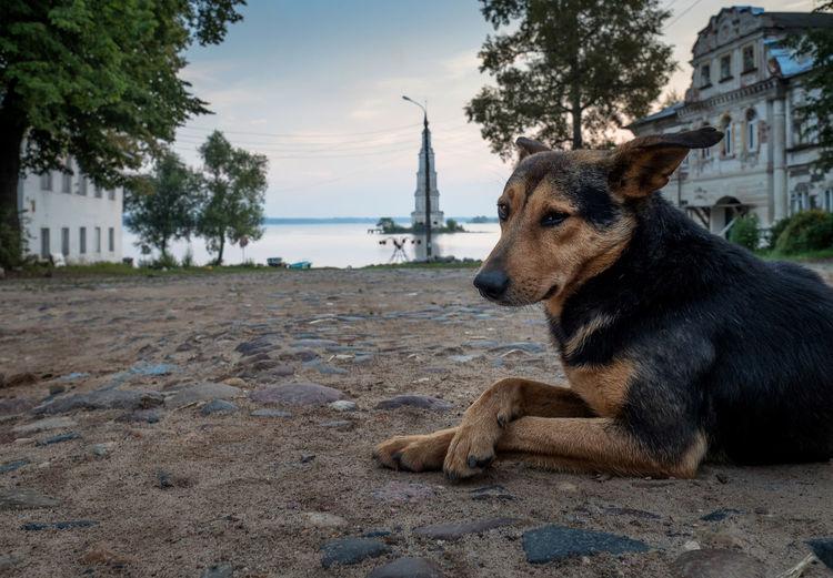 DOG LYING DOWN ON BEACH