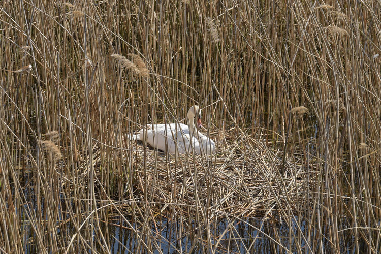 View of bird on dry grass