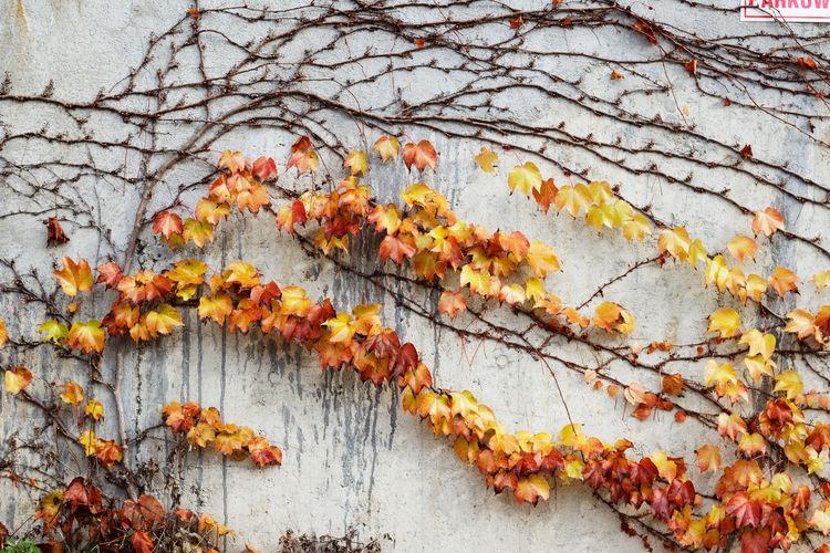 Autumn tree against orange sky