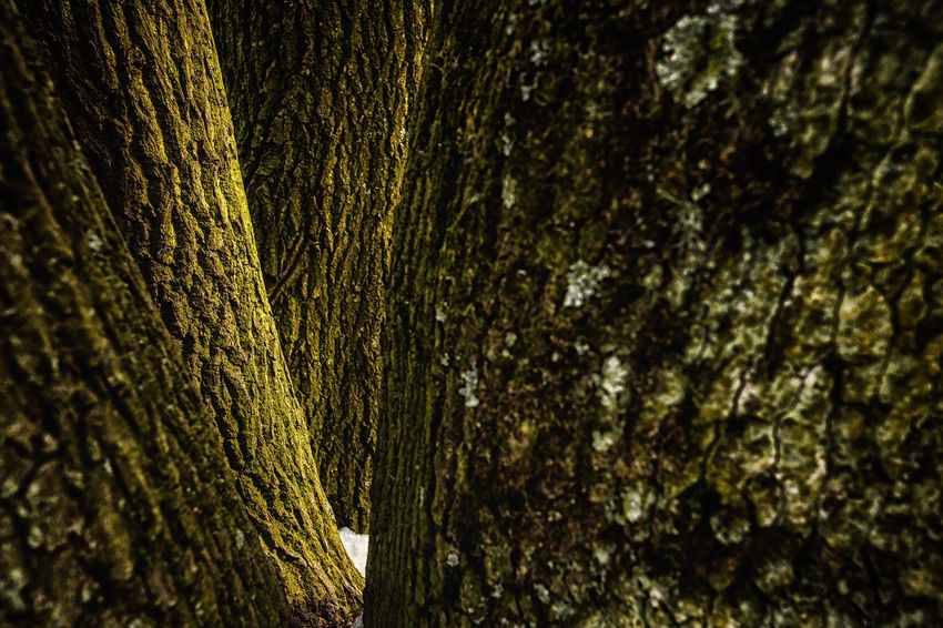 Green Color Tree Trees Forest Photography Moss Oak Texture Trunck