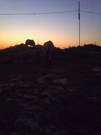Hello World Hi! The Sunset Horse Happy Time