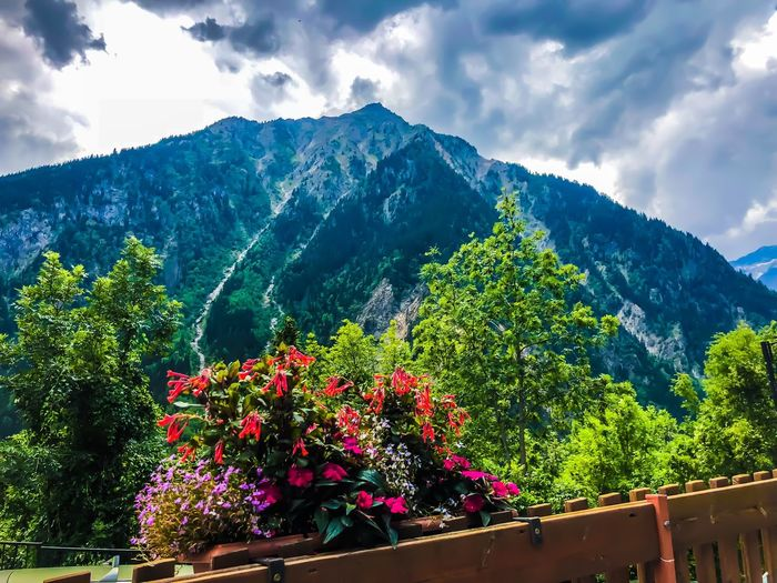 Venosc 06/08/2018 Plant Beauty In Nature Sky Mountain Nature Flower Tree No People Green Color Scenics - Nature Tranquility Outdoors