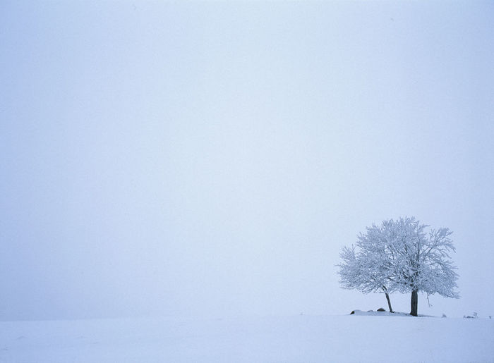 Close-up of tree on snow covered landscape