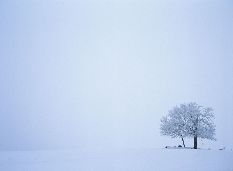 Cold Cold Temperature Day Focus On Foreground Fog Foggy Nature Poor Visibility Single Tree Snow Suwalszczyzna Tree White Winter Winter