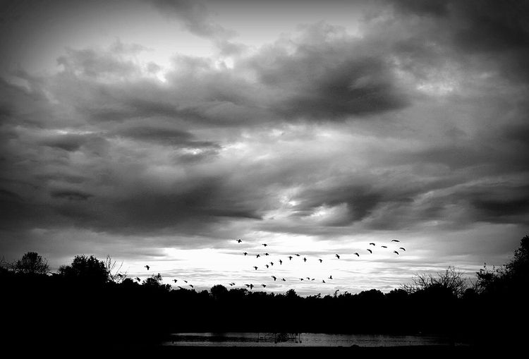 Low angle view of birds on tree against cloudy sky