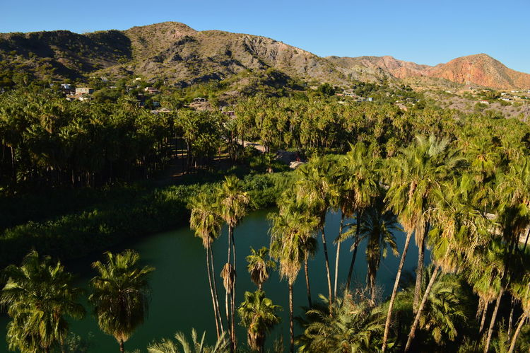 Oasis de San Ignacio Beauty In Nature Clear Sky Day Growth Lake Landscape Mountain Mountain Range Nature No People Outdoors Plant Scenics Sky Sunlight Tranquil Scene Tranquility Tree