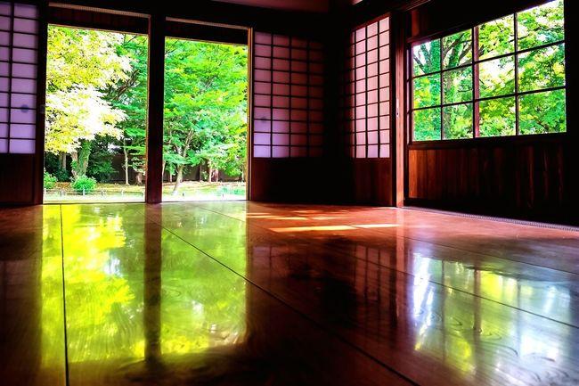 Green reflection Window Indoors  Reflection Reflection Flooring Floortraits Door Doors Shoji Trees Summer Summer Views Kyoto Kyoto, Japan Home Interior Day Sunlight Architecture Nature