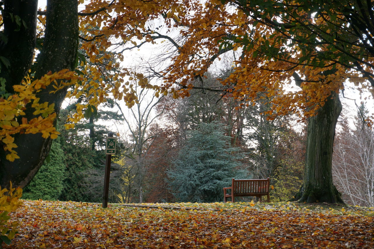 TREES AND LEAVES IN PARK
