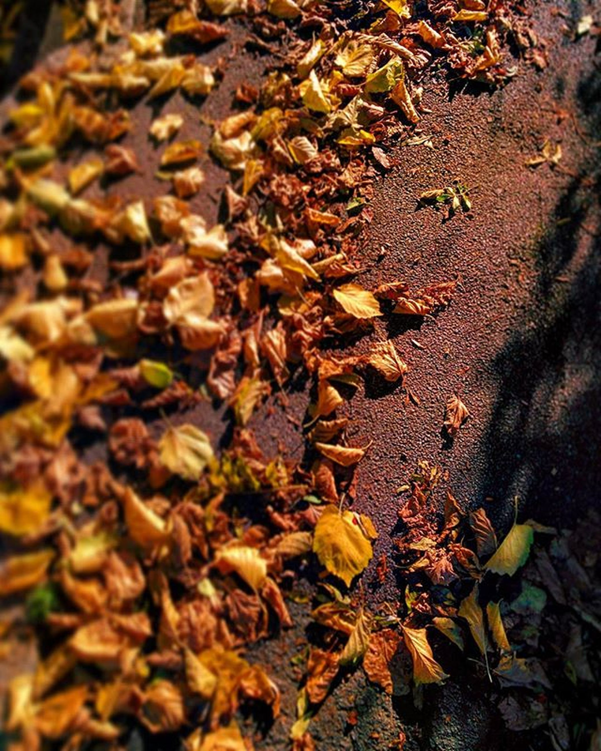 leaf, abundance, dry, high angle view, nature, close-up, full frame, growth, selective focus, outdoors, day, backgrounds, no people, field, large group of objects, sunlight, plant, fragility, leaves, textured