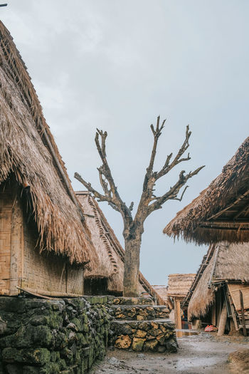 Bare tree outside huts against cloudy sky