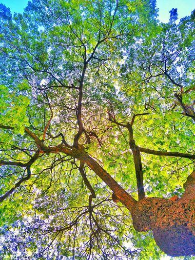 tree for men in