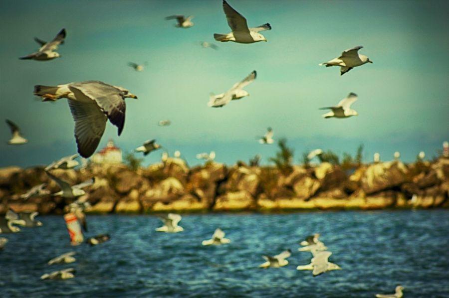 Lake Erie Ohio Ashtabula County Seagulls