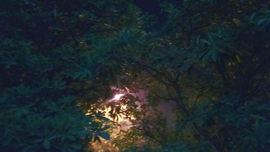 A Source Of Light Through Tree Leaves Point Source Illuminated Night Nature No People Mobile Photography SSClickpix SSClicks SSClickPics