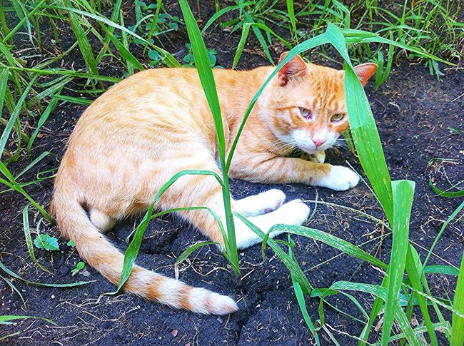 Cat. Animal. Beauty . Summer 2017. Gelendgik . Hot weather . Grass . Hanging Out Hello World Enjoying Life
