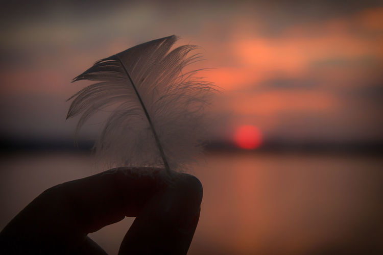 Cropped hand of woman holding feather at beach during sunset