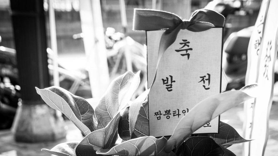 개업식,꽃 Korea Seoul