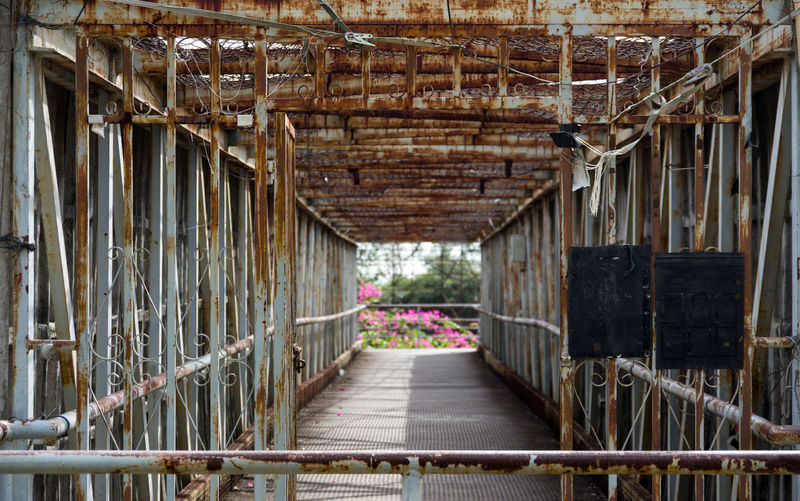 Footbridge amidst plants