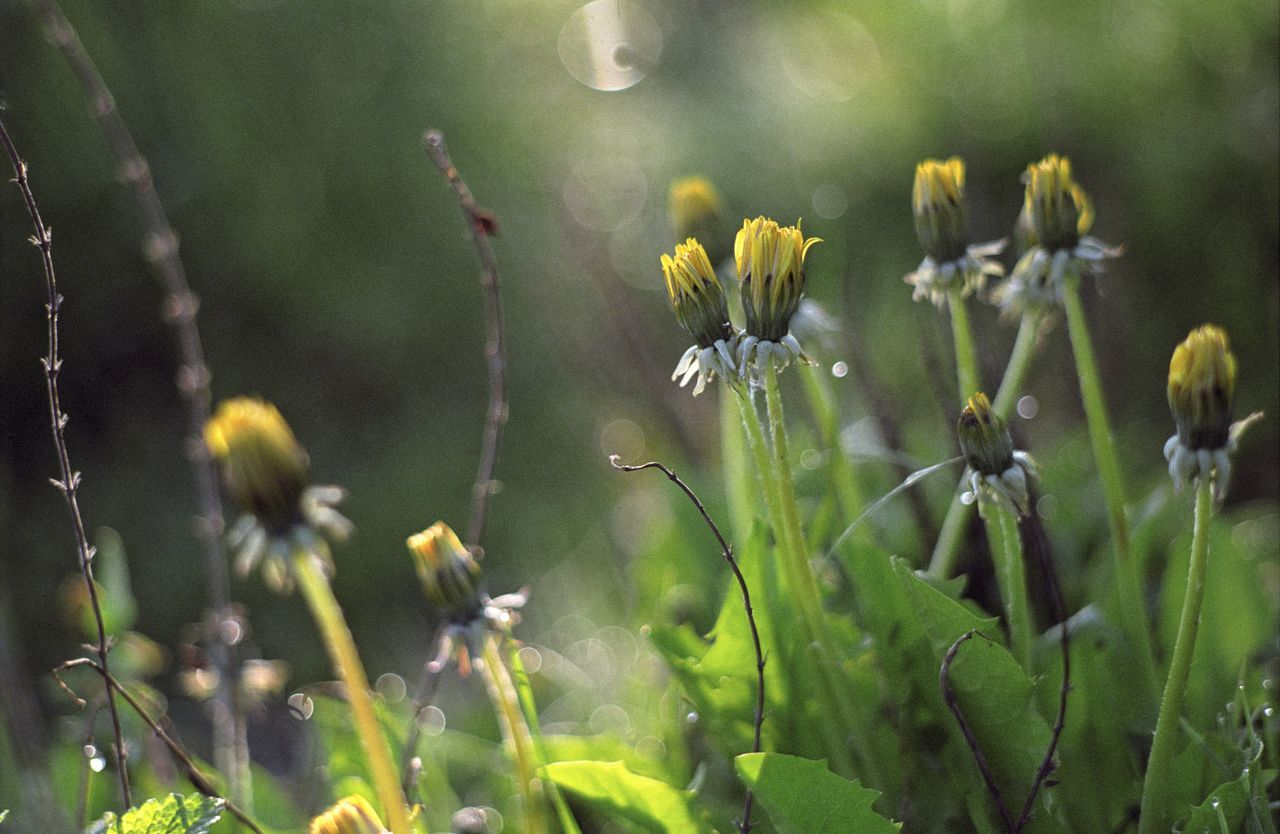 growth, nature, plant, flower, beauty in nature, no people, yellow, outdoors, freshness, fragility, close-up, day