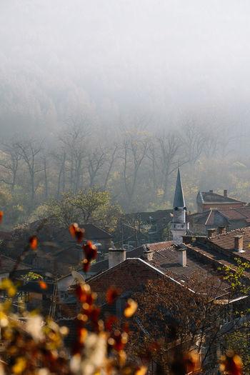 Fog Autumn