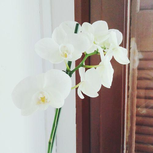 Last spring bloom... First Eyeem Photo