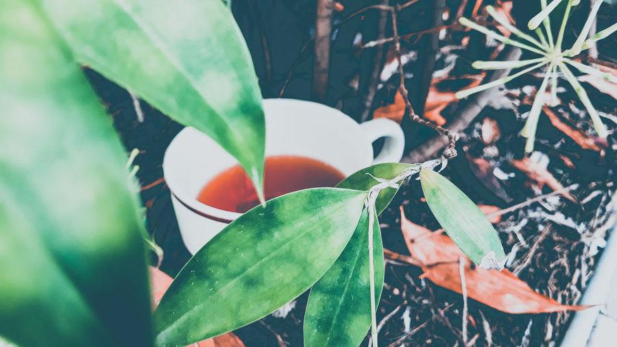 tea Tea Leaf